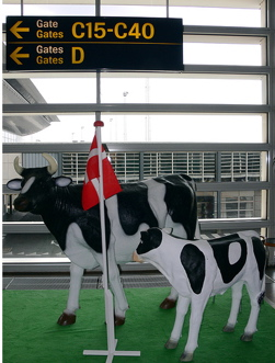 denmark-reveres-cows-not-cow-farts