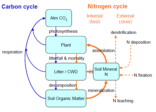 Carbon and nitrogen cycle diagram wiring library scientists integrate nitrogen cycle into climate model results roundhouse the nitrogen cycle diagram carbon and nitrogen cycle diagram ccuart Choice Image