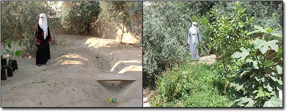 before_after_garden_jordan_permaculture